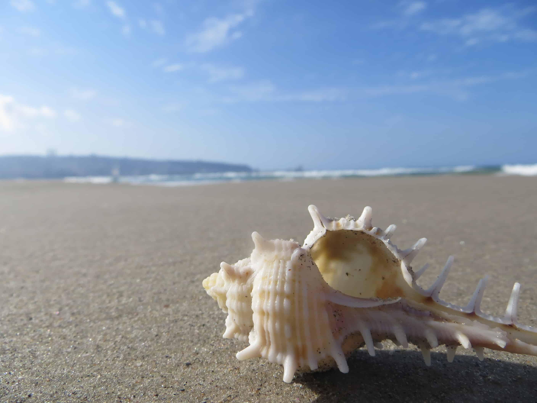קולו של הים   התפרסם במעגלי אור